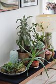 House plants and table lamp on flower stand