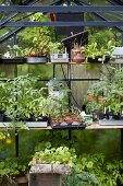 Seedlings and various plants in greenhouse
