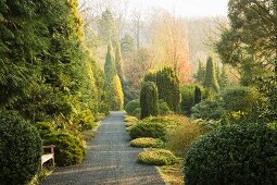 Path leading through trees, bushes and shrubs in green garden