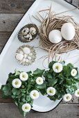 Bellis next to eggs in nest and flan tins on tray