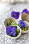 Cress in egg shells lined with newspaper