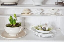Soup tureens plantes wiith hyacinths and moss