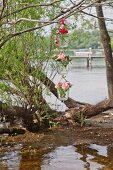 Roses and sweet Williams in three suspended vases on river shore