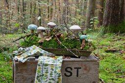 Holzpilze im Tablett mit Moos auf einer alten Holzkiste im Wald