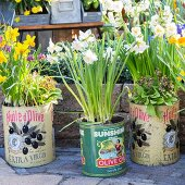 Spring flowers in various vintage tin cans
