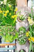 Vintage arrangement of spring-flowering plants