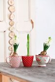 White hyacinths and amaryllis in vintage cups on wooden table