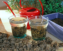 Ranunculus, tubers for 3 hours in water soak