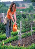Peas sowing