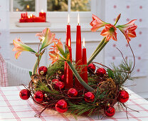 Advent wreath made with blooming Hippeastrum, Pinus