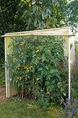 Miniature tomato house made of foil