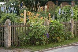Artificial garden perennial border with Delphinium, Hemerocallis
