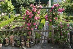 Art garden, climbing roses at the entrance to the cottage garden