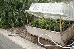 Artist garden cuttings propagation