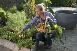 Create trapeze beds as a vegetable and herb garden