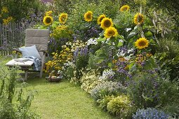 Helianthus 'Summer Breeze', Agastache 'Blue Fortune'