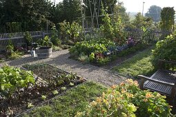 Vegetable garden with beans, salad, cabbage