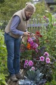 Woman cuts flowers for bouquet