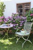 Schattiger Sitzplatz mit Hydrangea (Hortensien) am Haus