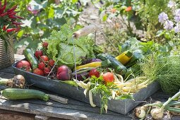 Metal basket with freshly harvested vegetables, tomatoes
