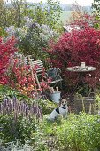 Enchanted Garden corner with small seating place between Euonymus alatus