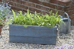 Summer flower meadow in wooden box