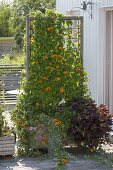 Mobile case with Thunbergia as privacy screen