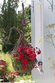 Homemade hanging basket in egg shape with Pelargonium zonal