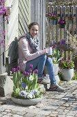 Gray bowl and pots with Tulipa 'Purple Prince' (tulip)