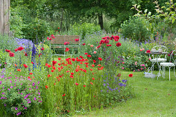 Early summer garden with poppy