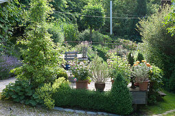 Wooden terrace in the garden on the hillside, buckets with roses and rosemary