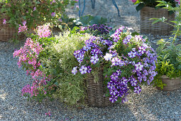 Planting basket with balcony flowers