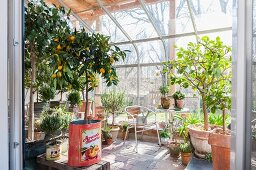 Various plants in terracotta pots and vintage tin cans in greenhouse