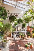 Various potted plants and dog in bright greenhouse