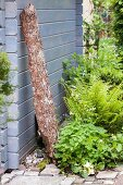 Ferns, forget-me-nots and white-flowering plants in border next to large piece of bark leaning against summer house