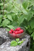 Small glass bowl of raspberries on stone