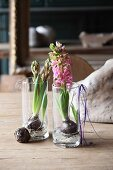 Hyacinths in glasses of water on rustic wooden table
