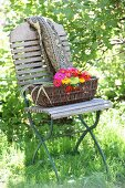 Basket of colourful zinnias and printed blanket on folding chair in garden