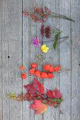 Virginia creeper, physalis, dahlias, sedum and rose hips