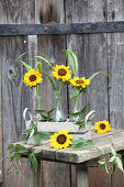 Sunflowers in glass bottles in wooden crate