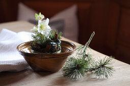 Arrangement of hellebore, pine sprigs and cinnamon sticks