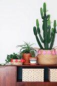 Efeu und Kaktus in verzierten Korbübertöpfen mit Retroflair