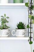Zimmerpflanzent in marmorierten Tassen auf weissem Regalboden von schwarzem String-Regal