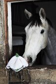 Pferd riecht an einer gehäkelten Mütze in Schneeglöckchenform