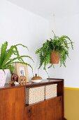 Grünpflanze in Makramee-Blumenampel über Retro Sideboard aufgehängt