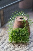 Tiny handbag formed from shepherd's purse leaning against terracotta pot