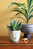 Yuccapalme und Sukkulente in Übertöpfen