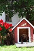 Two dogs and red kennel in garden