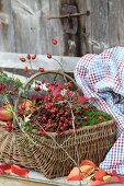 Autumn arrangement of rose hips, moss and apples in wicker basket on vintage bench