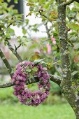Wreath of clover flowers on fruit tree in garden